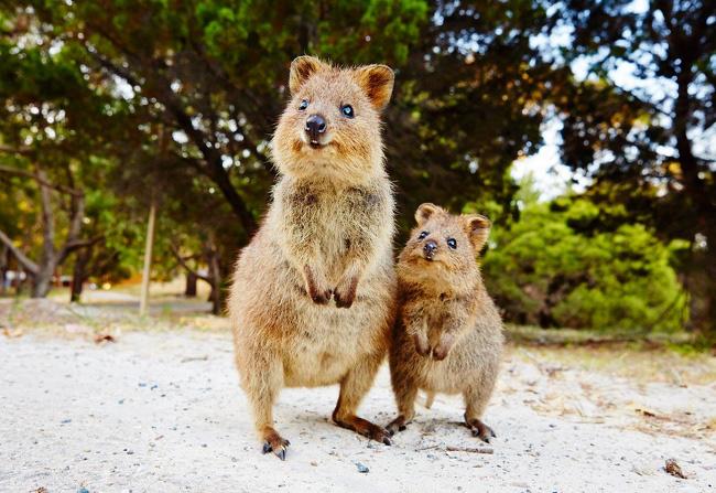 Chùm ảnh thiên nhiên kì dị ở Úc gây tò mò với người nước ngoài nhưng lại khiến dân bản địa phải nhiều phen khóc thét - Ảnh 22.