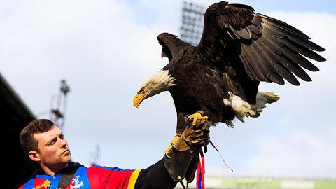 Đại bàng linh vật của Crystal Palace  bị chết