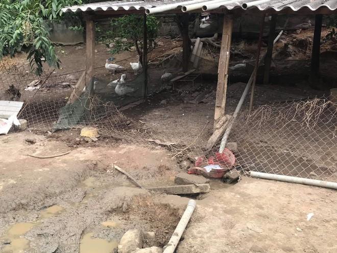 Trâu 'điên' húc chết một phụ nữ ở Hà Tĩnh - ảnh 1