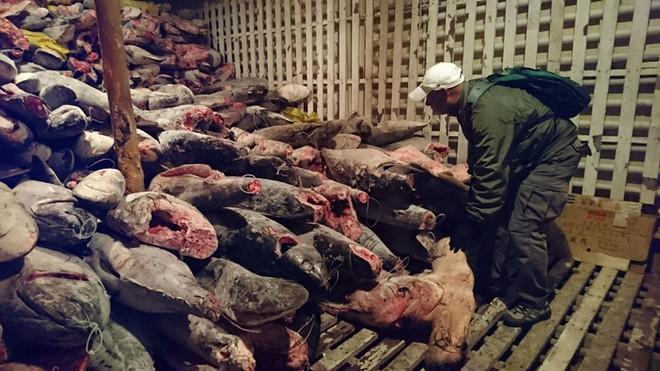 Ecuador báo động vì đội tàu cá khủng của Trung Quốc gần khu bảo tồn - ảnh 1