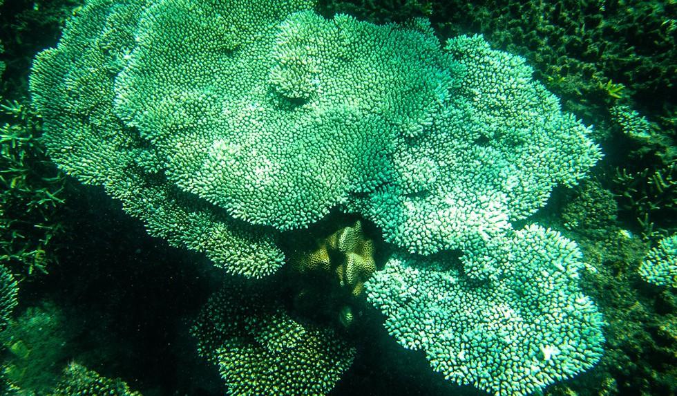 'Choáng' với cột san hô khổng lồ khi lặn biển ở Côn Đảo - ảnh 11