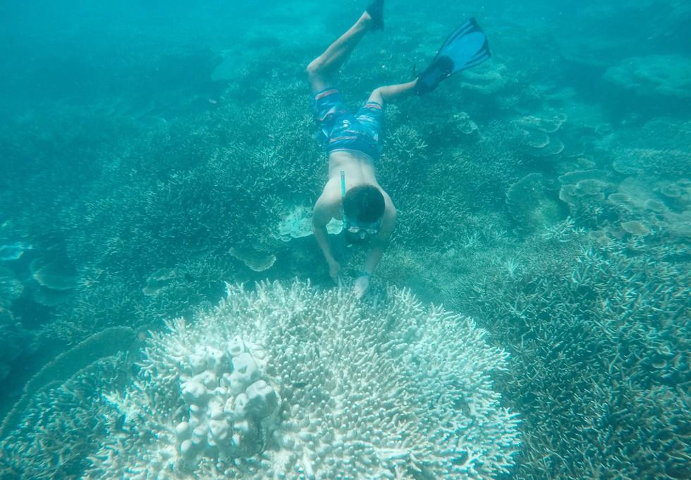 'Choáng' với cột san hô khổng lồ khi lặn biển ở Côn Đảo - ảnh 10