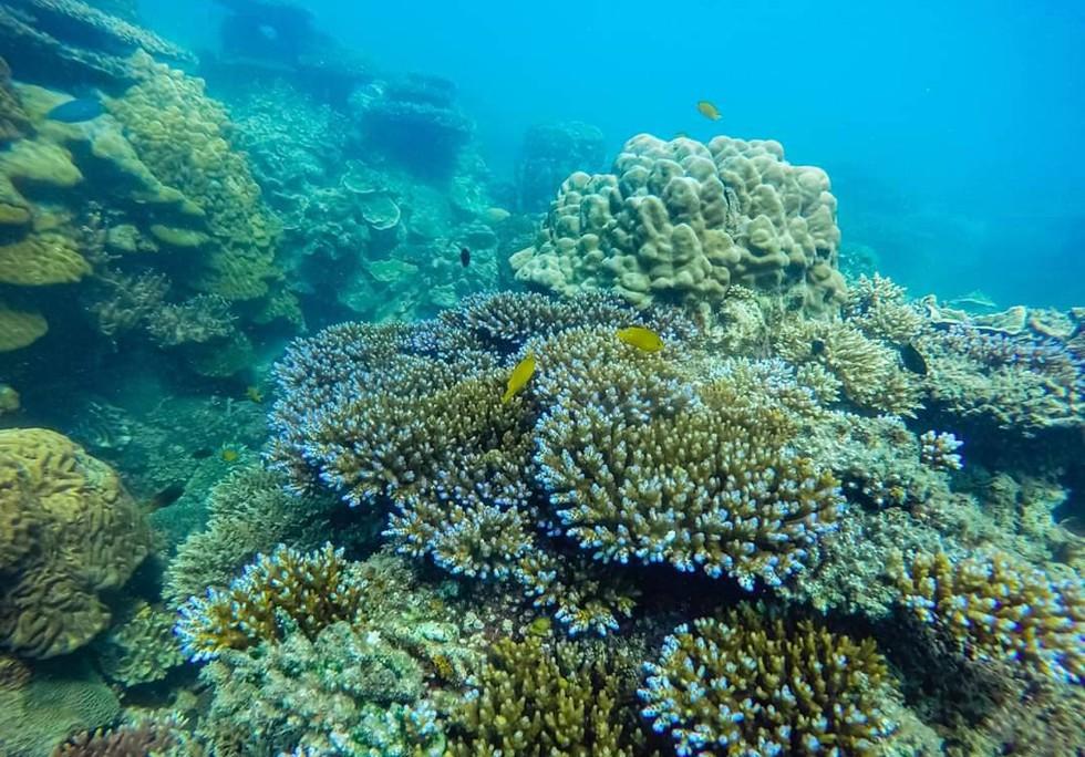 'Choáng' với cột san hô khổng lồ khi lặn biển ở Côn Đảo - ảnh 8