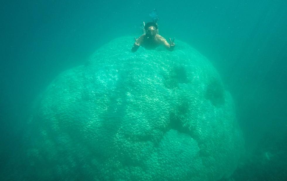'Choáng' với cột san hô khổng lồ khi lặn biển ở Côn Đảo - ảnh 3