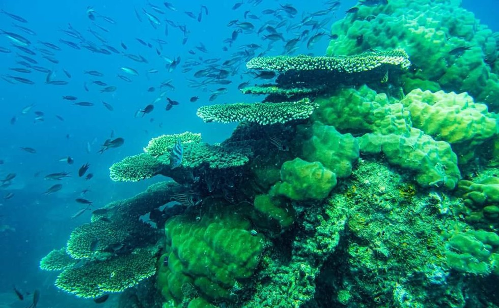 'Choáng' với cột san hô khổng lồ khi lặn biển ở Côn Đảo - ảnh 6