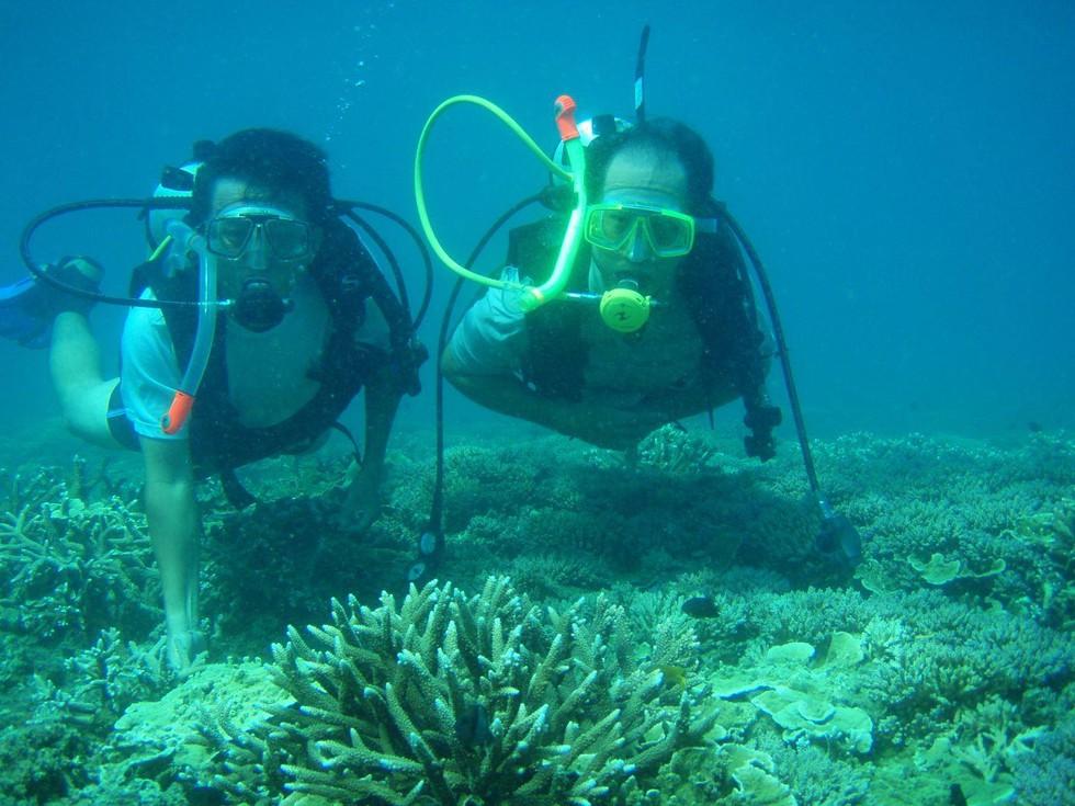 'Choáng' với cột san hô khổng lồ khi lặn biển ở Côn Đảo - ảnh 17