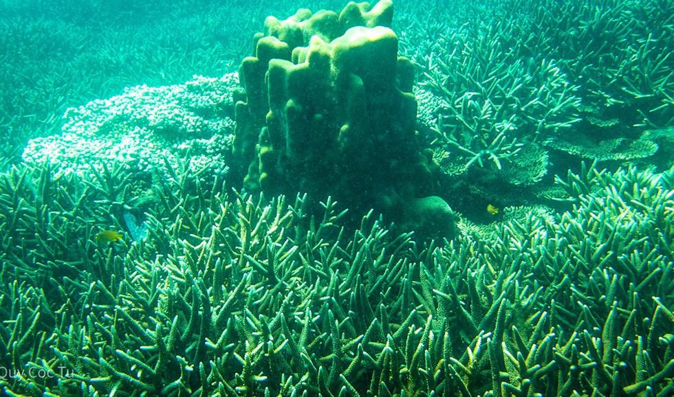 'Choáng' với cột san hô khổng lồ khi lặn biển ở Côn Đảo - ảnh 4