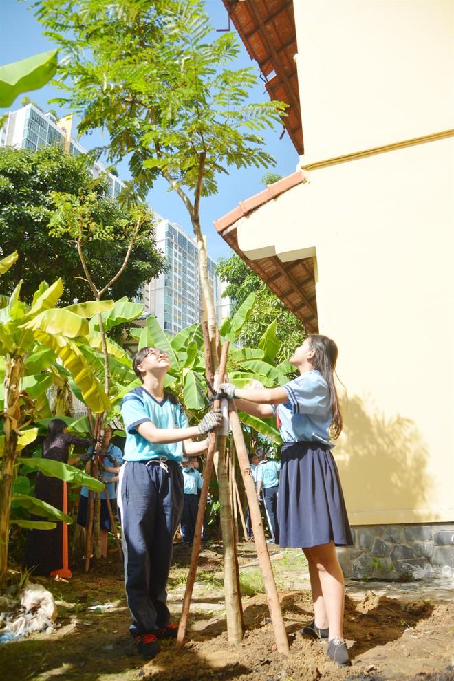 Không chặt cây, đây là cách cô trò ở TP.HCM bảo vệ linh hồn trường học - ảnh 2